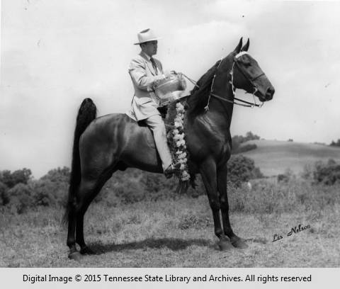 the significance of the walking horse breed to the history of tennessee Known for their incredible gaits, the tennessee walking horse is a  image  source: eno, henry c – national museum of natural history  the twh stud  book has been closed since 1947, meaning every single horse bred.